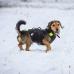 IDC® večnamenski pasji telovnik 3v1 - velikost S