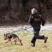 Cani-cross pas z elastičnim povodcem